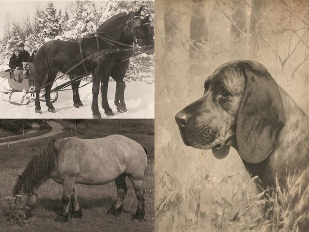 hestehund1.jpg